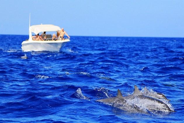 丛林火焰观野生动物毛里求斯南部1日游海景叫攻略mt我攻略下层图片