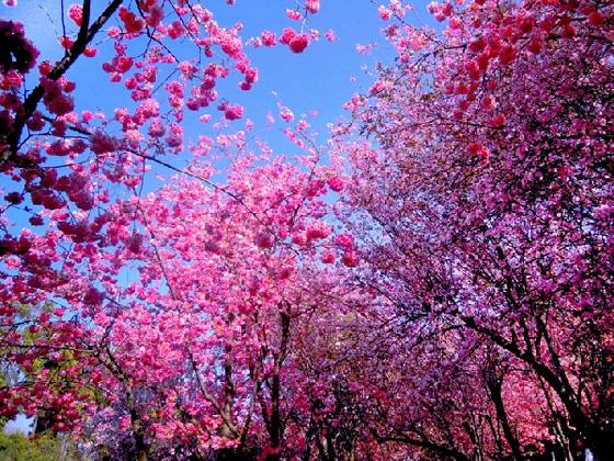 阳光春天幼儿园